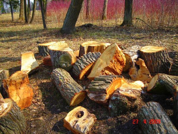 pavlovsk-park-trees-cut-down-yuri-shevnin