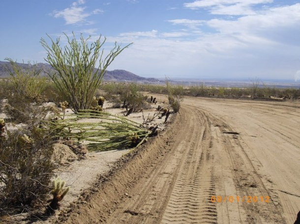 New access road through the Ocotillo Forest. Thousands of Ocotillo's destroyed
