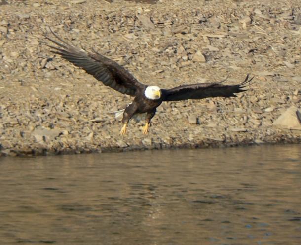 eagle  7. 31.2013