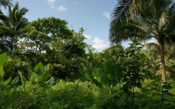 Jungle vegetation - Puerto Galera, Mindoro island