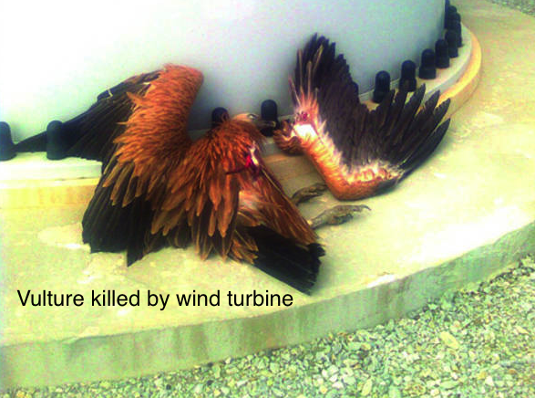 77334770-griffon-vulture