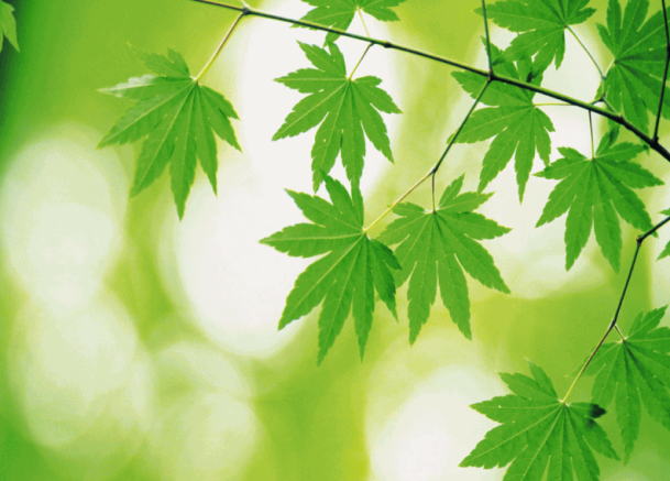 Green-Foliage-Free-Screensaver_1