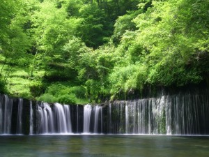 waterfall-lush-creek-forest-green-nature-us-688262-2