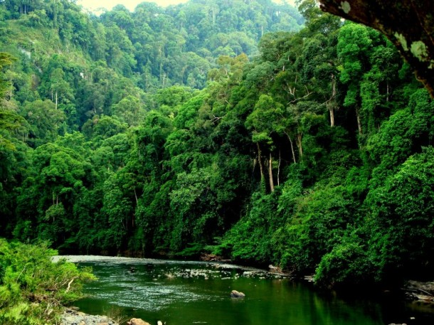 Green forest lush Sabah_47-2