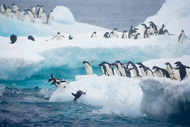 These penguins look pretty happy to me.