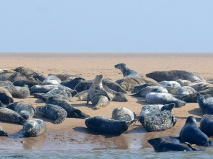 Seals-Newburgh-7-660x496